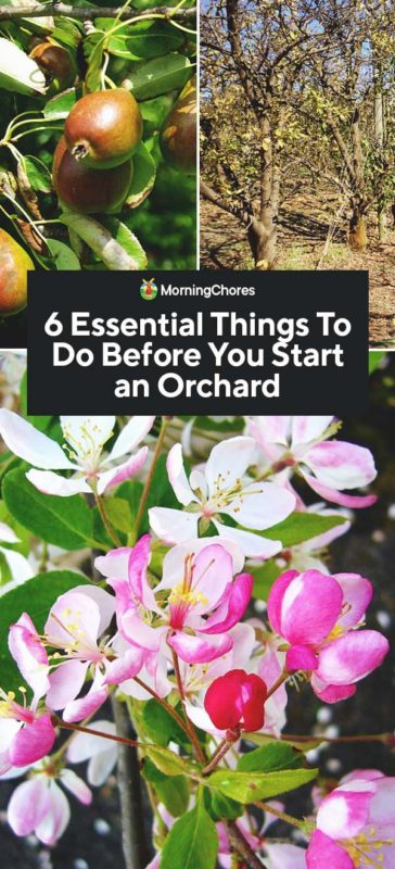 This image has an empty alt attribute; its file name is 6-Essential-Things-To-Do-Before-You-Start-an-Orchard-PIN-364x800.jpg
