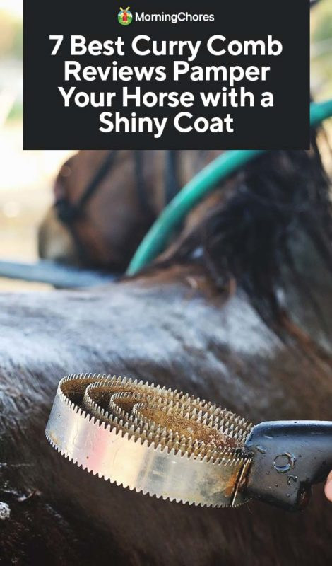 This image has an empty alt attribute; its file name is 7-Best-Curry-Comb-Reviews-Pamper-Your-Horse-with-a-Shiny-Coat-PIN-470x800.jpg