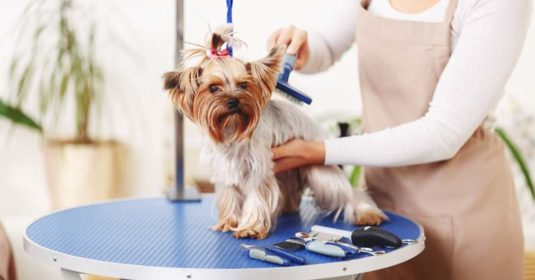 8 Best Pet Grooming Kit: Pamper Your Fur-baby with Pet-friendly Tools
