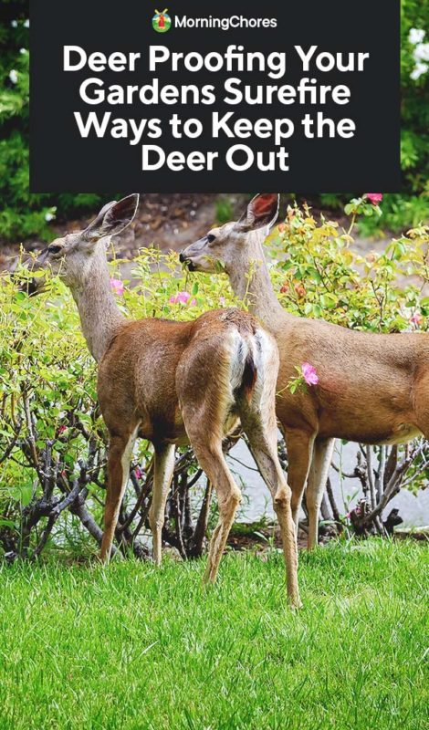 This image has an empty alt attribute; its file name is Deer-Proofing-Your-Gardens-Surefire-Ways-to-Keep-the-Deer-Out-PIN-470x800.jpg