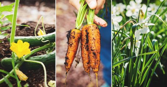 Garden Planning Tips for Every Season