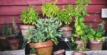 How to Succeed at Herb Container Gardening as a Beginner
