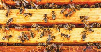 How to Get Rid of Small Hive Beetles for Good in 5 Fail