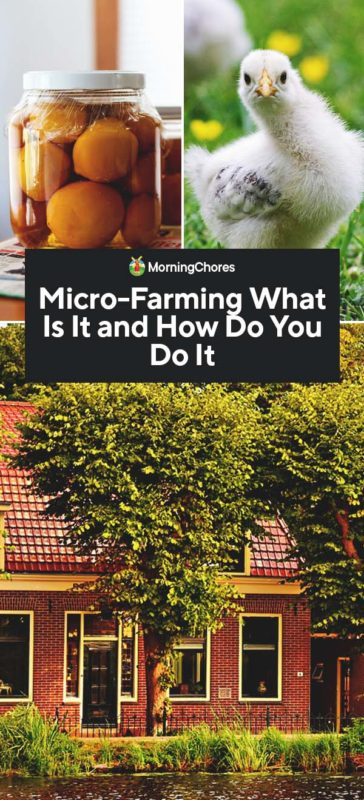 This image has an empty alt attribute; its file name is Micro-Farming-What-Is-It-and-How-Do-You-Do-It-PIN-364x800.jpg