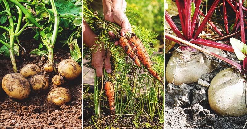 Unlocking the Secrets to Growing Underground Plants