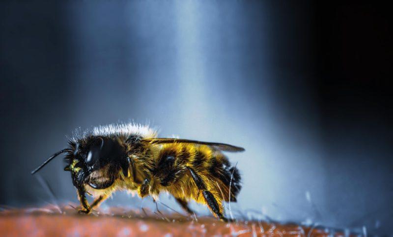 a bee - beekeeping dangers