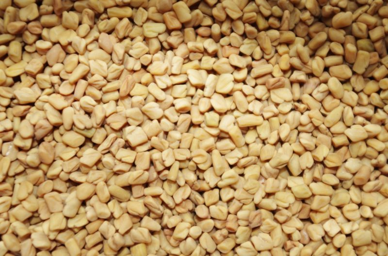 growing fenugreek seeds