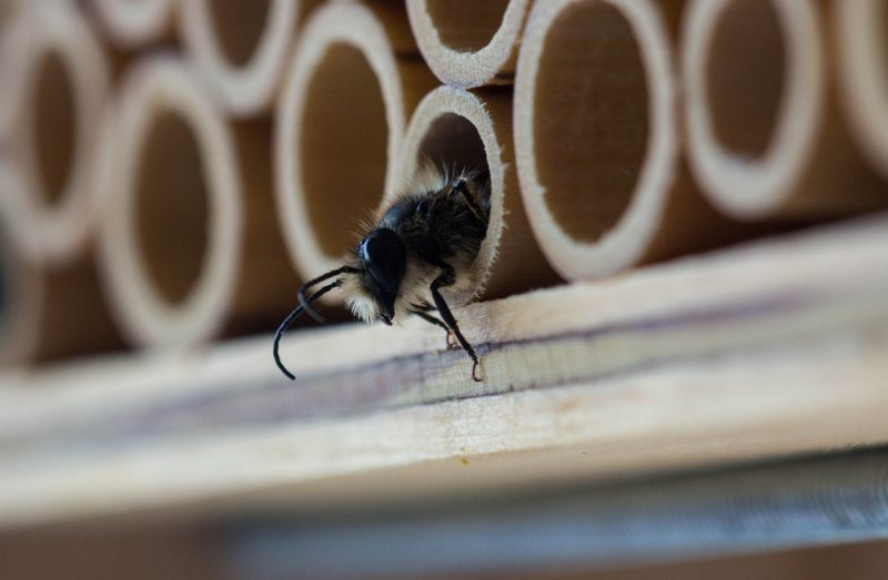 a bamboo bee house