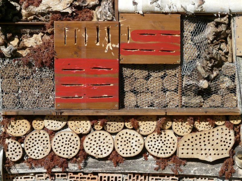 a Bee Hotel for various types of bees