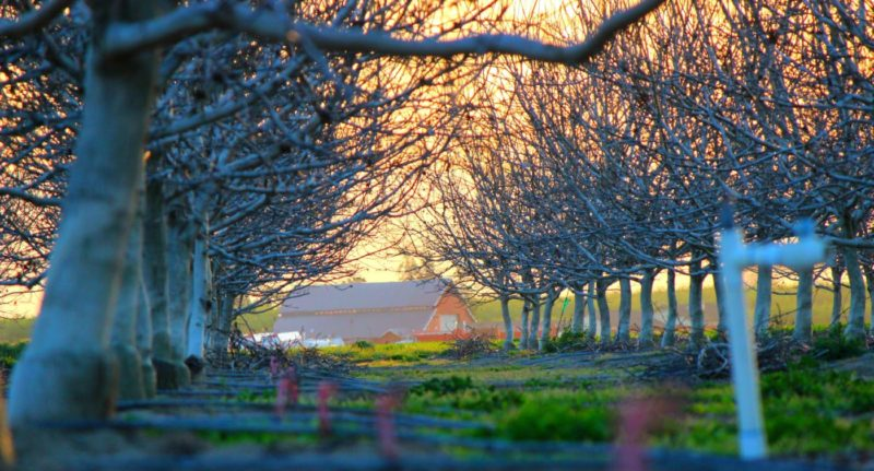 Experience the beauty once you plant an orchard