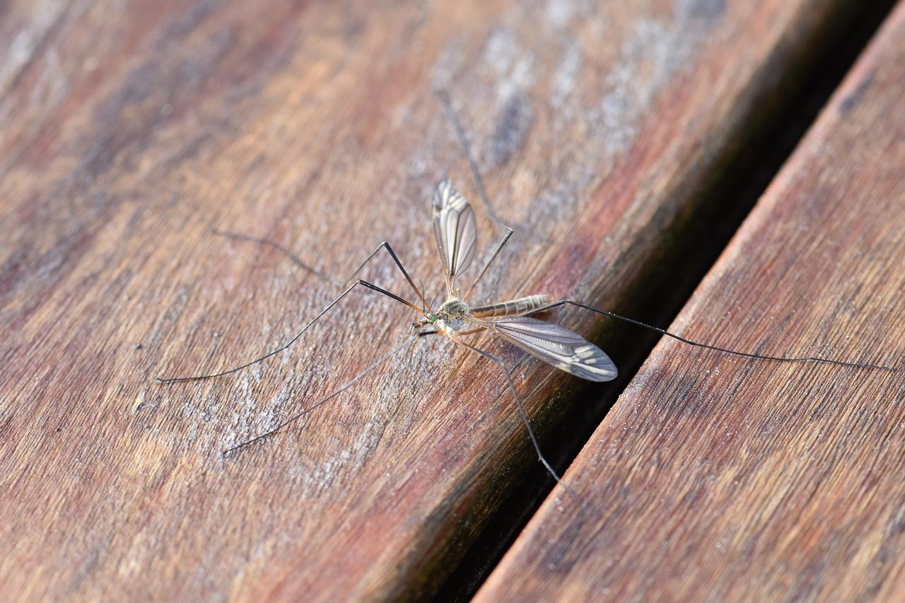 mosquito bug bites