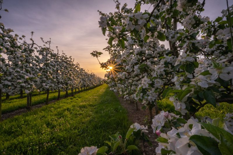 plant an orchard