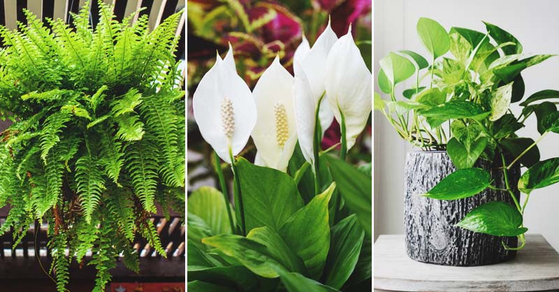 19 Plants That Purify the Air in Your Home or Office
