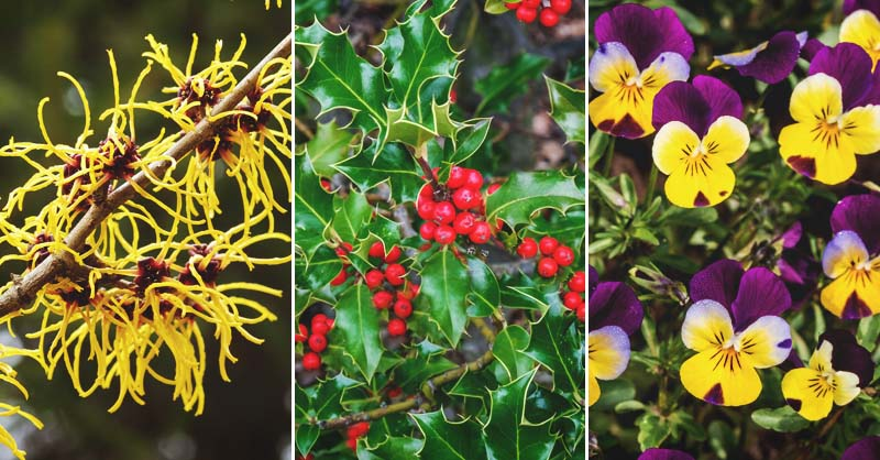 24 Winter Flowers That Will Add Vibrant Color To Your Garden