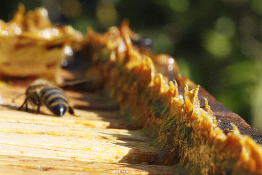 bee propolis can be seen here on top of the hive