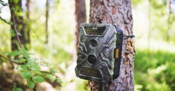 8 Best Trail Camera Reviews: Capture Incredible Wildlife Footage Day or Night