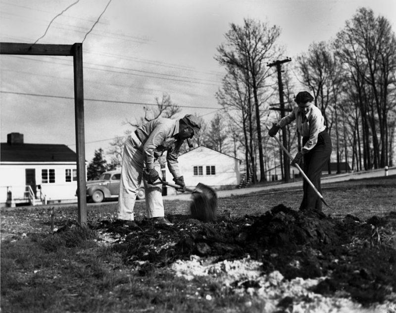By doe-oakridge - Victory Garden Oak Ridge, Public Domain, https://commons.wikimedia.org/w/index.php?curid=65679487