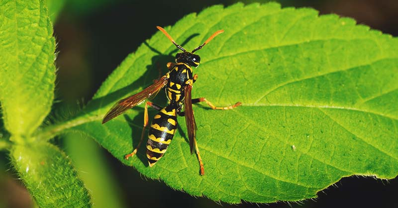 How to Get Rid of Wasps and a Few Reasons to Keep Them Around