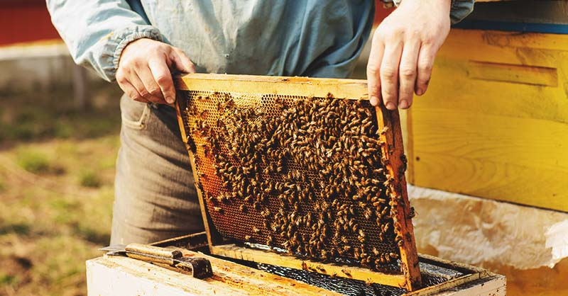 How to Rent Your Bees for Crop Pollination