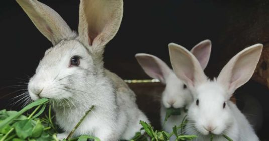 Raising Rabbits for Profit: 7 Ways to Make Extra Money with Rabbits