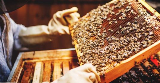 The Dangers of Beekeeping and How to Handle These Situations
