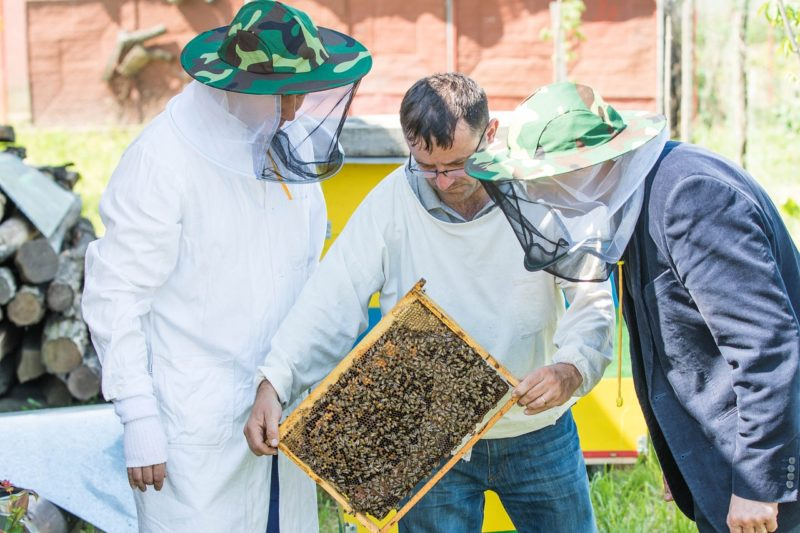 pollination services inspection