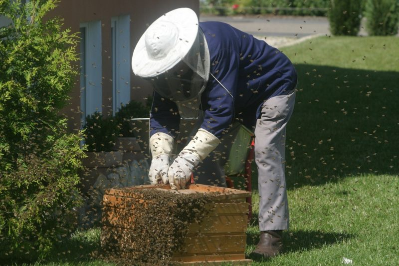 Pollination Services offered by renting bees out