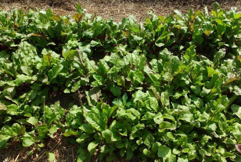 great reasons to grow baby vegetables