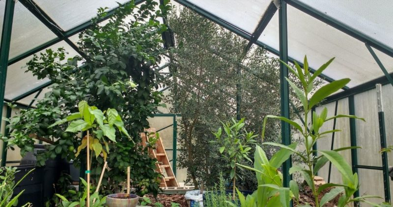 use the height to maximize your greenhouse