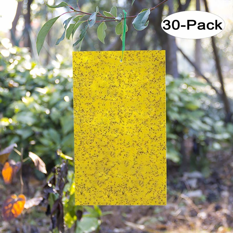 Kensizer-30-Pack-Dual-Sided-Yellow-Sticky-Traps