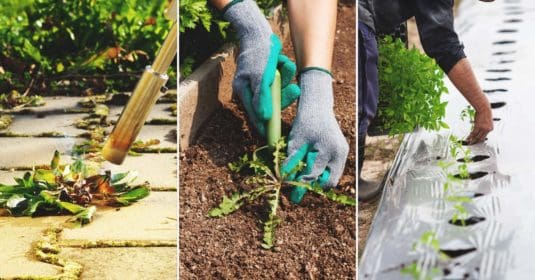 The Best Organic Weed Control Methods Out There