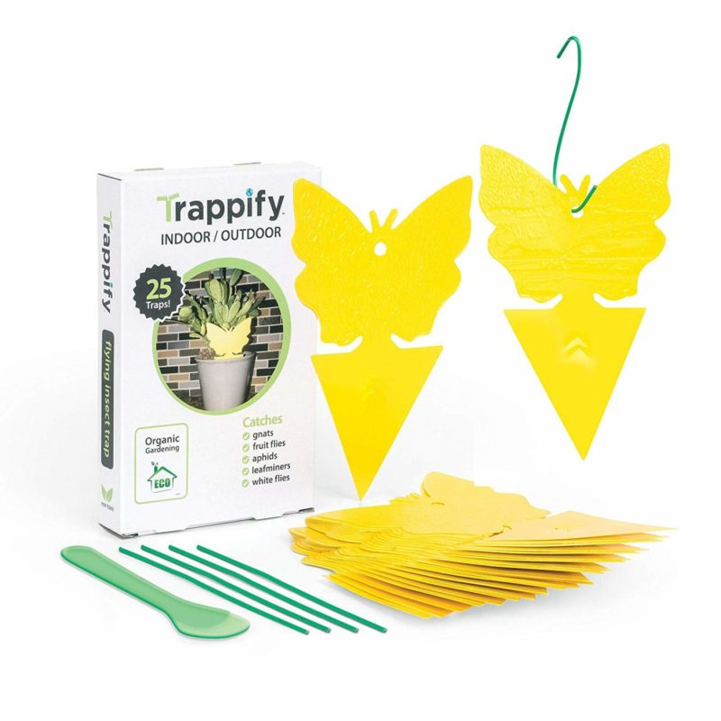 Trappify Sticky Fruit Fly and Gnat Trap - 25 Pk