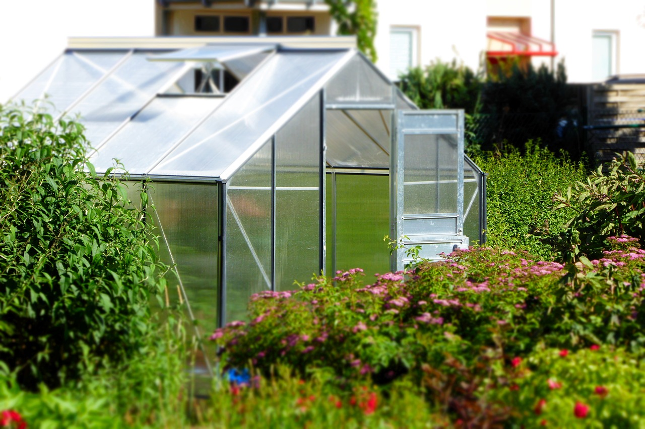 open windows in a greenhouse to regulate temperature