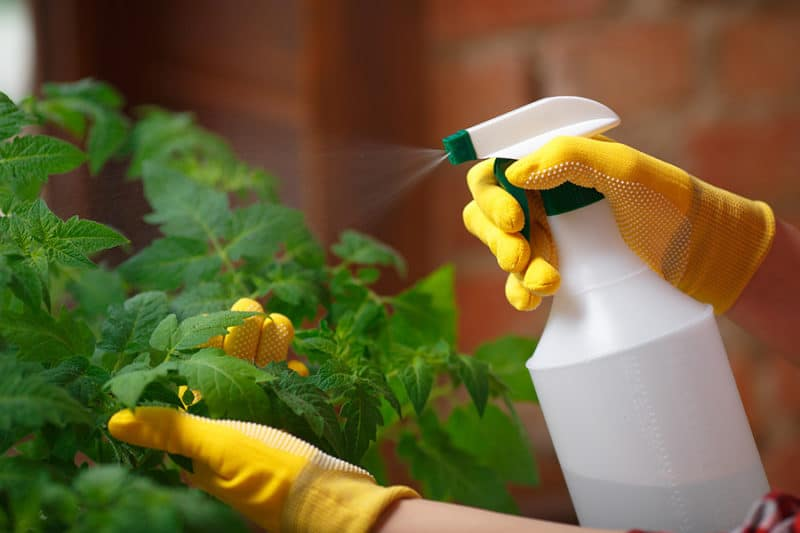 7 Homemade Fungicides That Will Save Your Garden on homemade plant hormone, sulfur plant fungicide, homemade plant water, homemade plant fertilizer, homemade plant insecticide, homemade plant food, homemade plant pesticide,