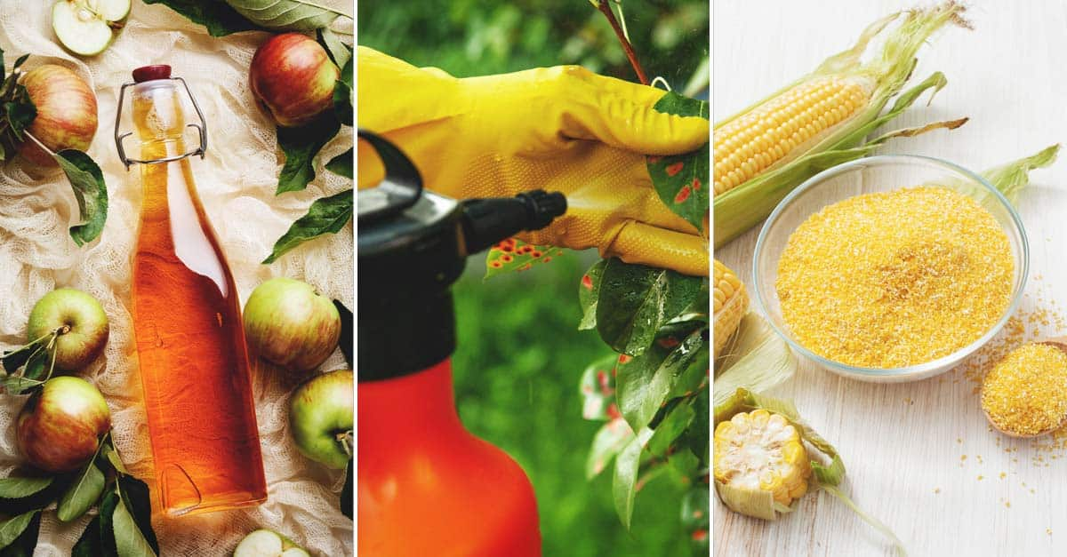 7 Homemade Fungicides That Will Save