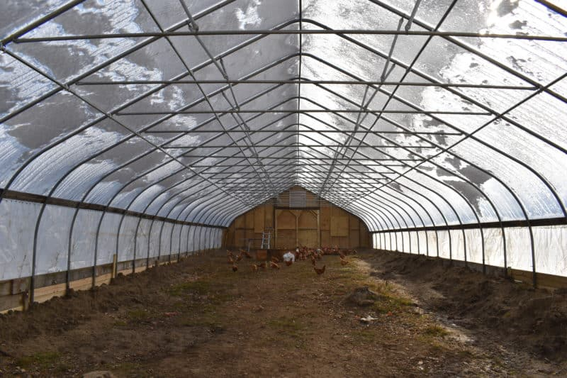 a greenhouse is an alternative to prepare your chicken coop for winter