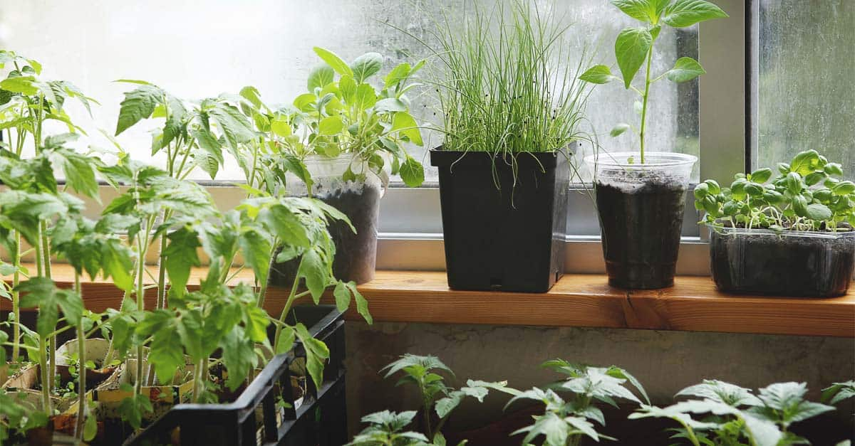 How To Start An Indoor Garden The Right Way