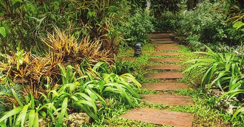 How to Build Rain Garden in Your Yard