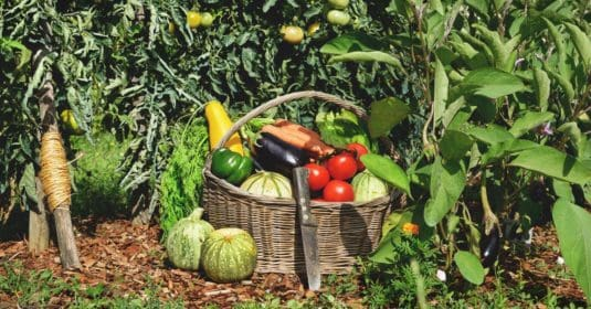 What is Subsistence Farming? The Past, Present, and Future