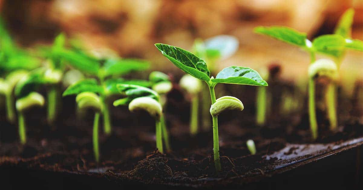The Right Seed Germination Temperature for Your Plants