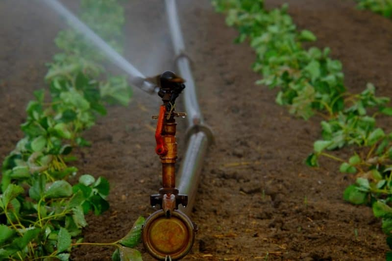 use sprinklers to keep your garden moist, to prevent the spread of fire as part of landscape hydrology