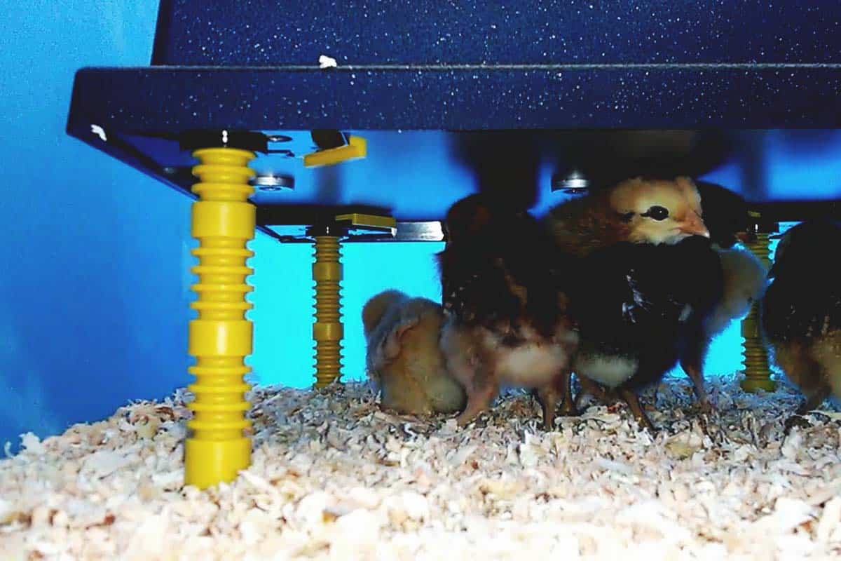 """16/"""" X 24/"""" Chick Brooder Heating Plate 66 W Rentacoop Warms Up To 50 Chicks"""