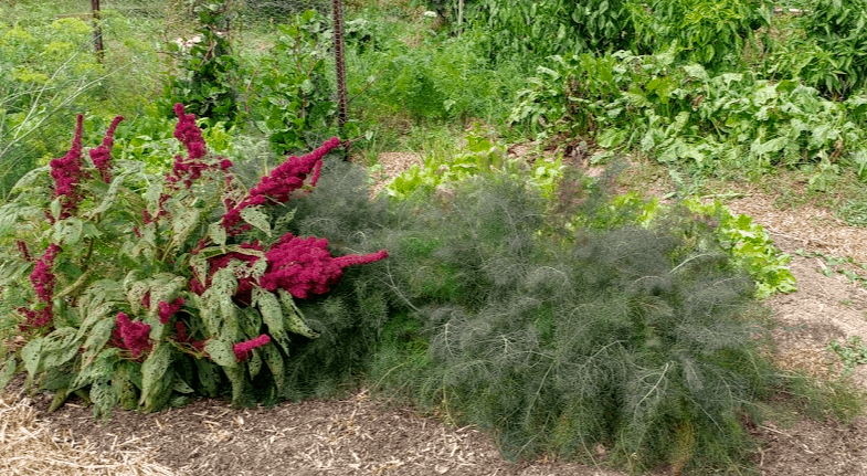 An all-purpose herb garden is a delight to see
