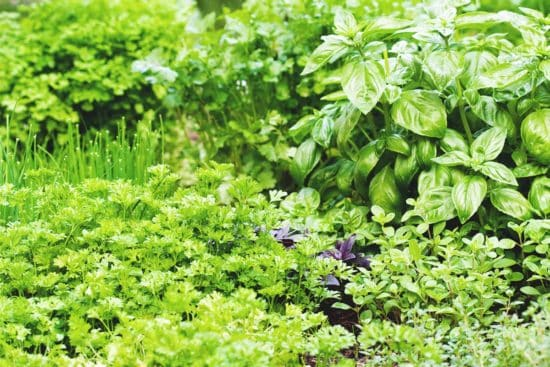 How to Plan an All-Purpose Herb Garden