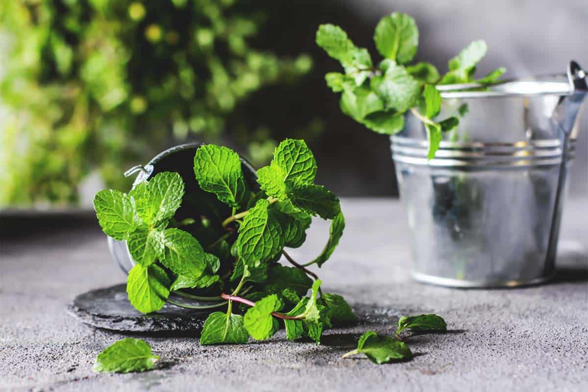 How to Use Mint Compost in Your Garden