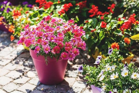 The 19 Best Patio Plants to Brighten Up Your Outdoor Space