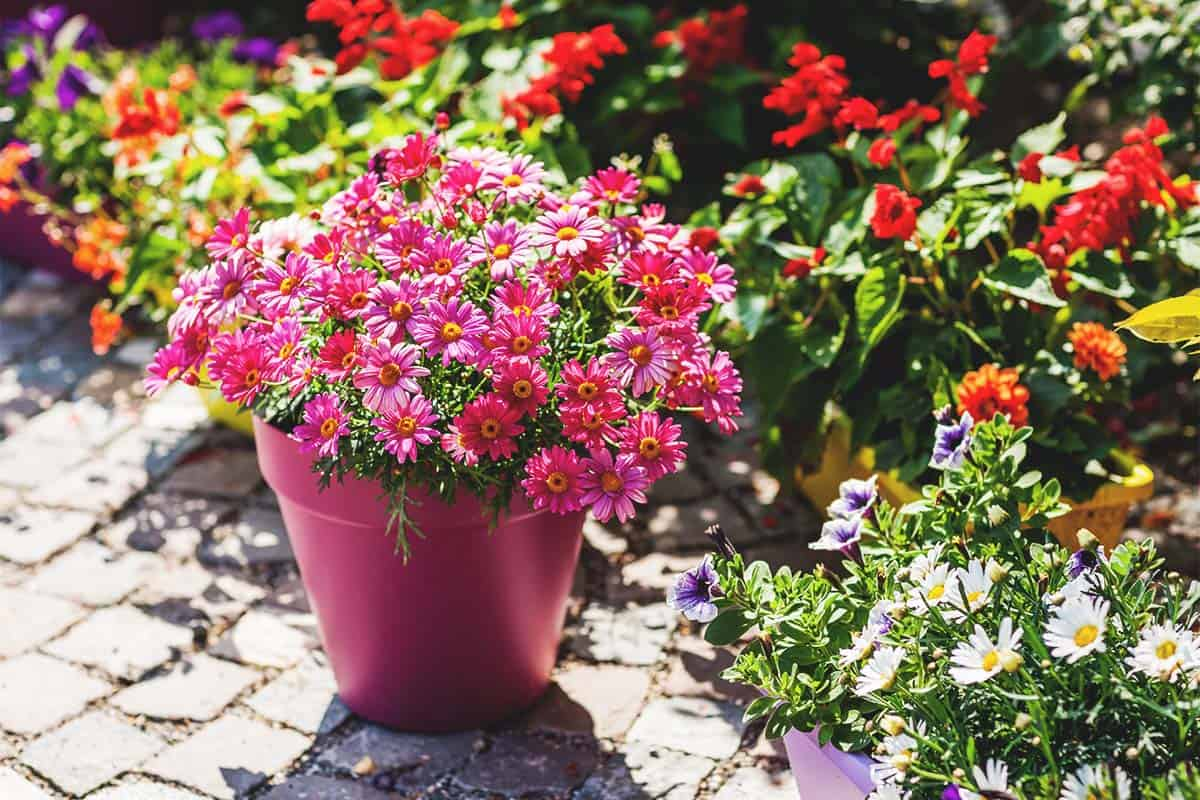 The 19 Best Patio Plants To Brighten Up