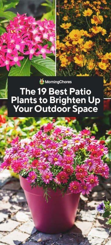 The 19 Best Patio Plants To Brighten Up, Outdoor Patio Plants