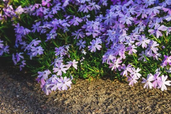 The Best Native Plants for Erosion Control and How to Use Them