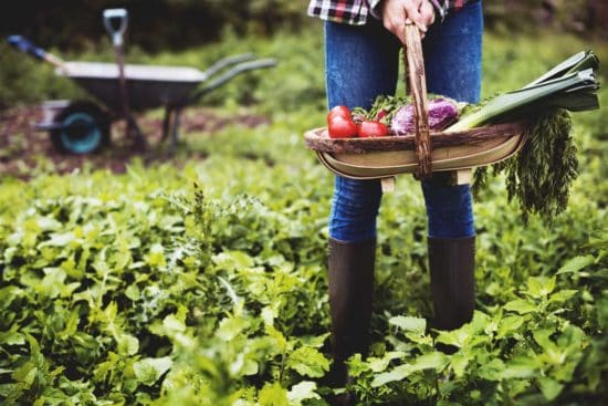 What Is Garden Sharing and How to Start or Join a Shared Garden